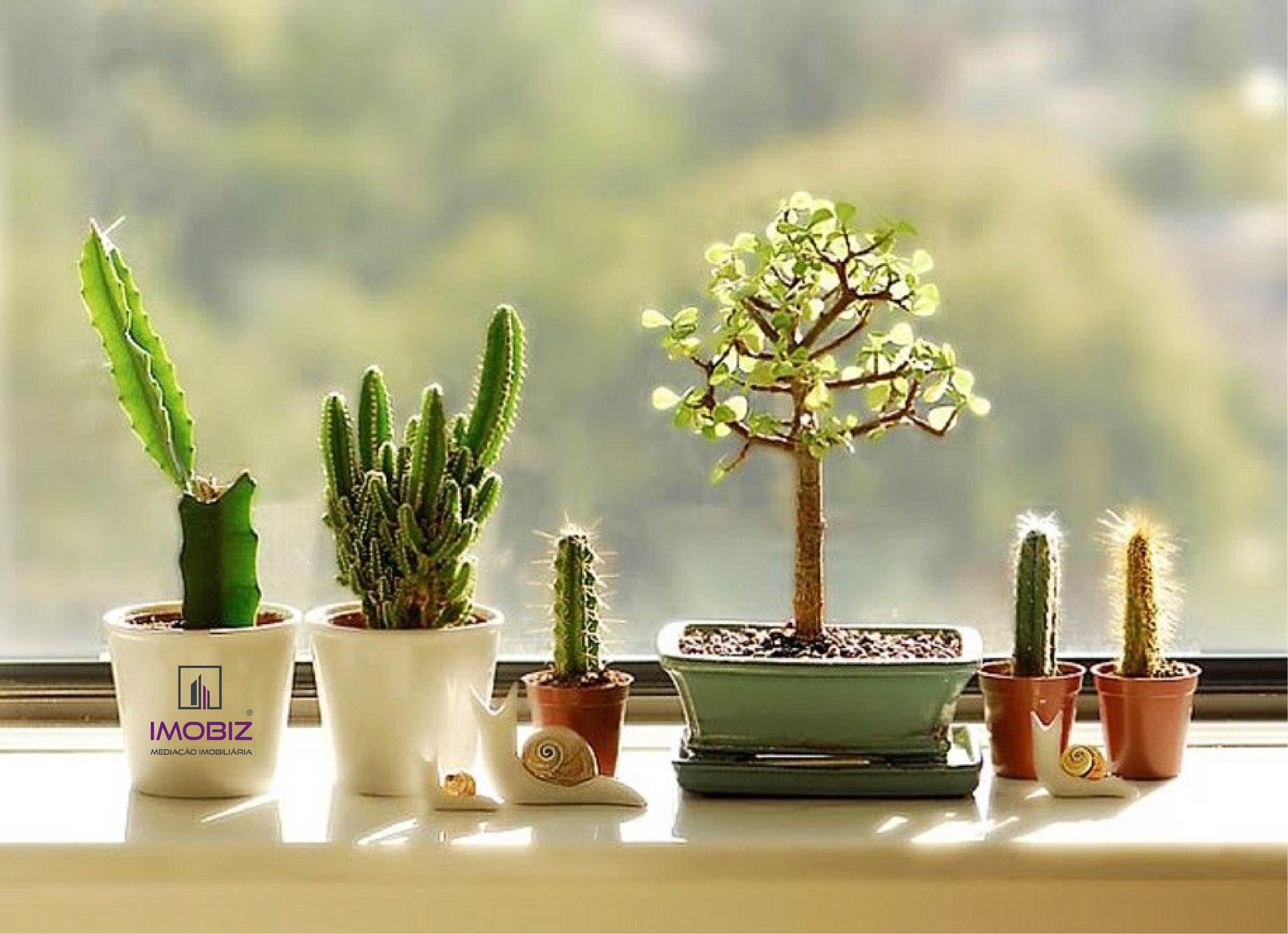 Boas ideias para criar um jardim no seu apartamento